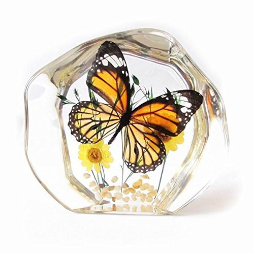 Real Butterfly Paperweight by Real Insect Company