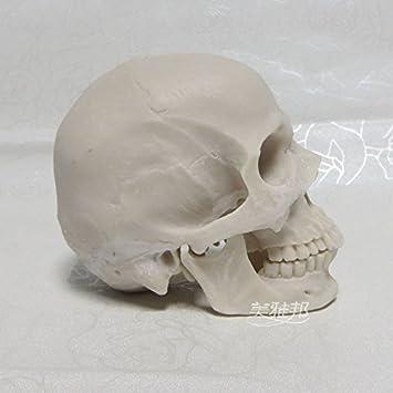 Earlywish Arts Crâne humain Réplique Résine Modèle médical ...