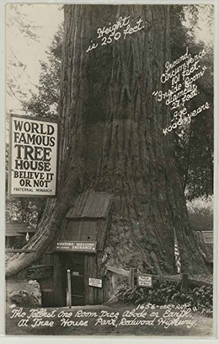 World Famous Tree House - Redwood Highway Piercy California (Vintage Real Photo Roadside Postcard)