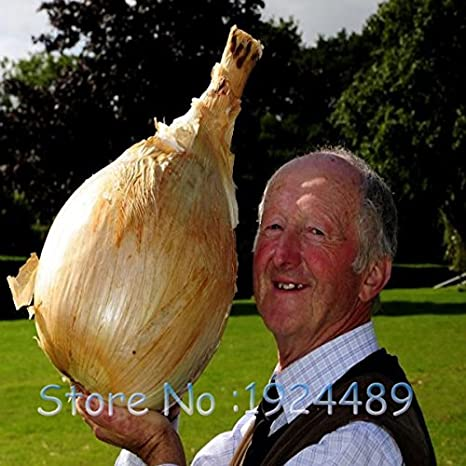 Venta! 100 Europea semillas de vainilla vegetales Perejil Ley Vegetable Seeds Seed rica fragancia con perejil