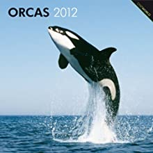 Orcas, Killer Whales 2012 Square 12X12 Wall Calendar (Multilingual Edition) BrownTrout Publishers Inc