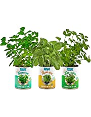 Save on Back to the Roots Kitchen Herb Garden, 3 Variety Pack, Organic Basil, Cilantro, and Mint Grow Kits, Grow Fresh Herbs Year Round, Top Gardening Gift, Holiday Gift, & Unique Gift and more