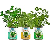 Back to the Roots Garden-in-a-Can Kitchen Herb Garden 3 Pack Variety Basil/Cilantro/Mint. DIY Indoor Organic Herb Growing Kit Grow Edible Herbs in Your Home Perfect Cooking Gift