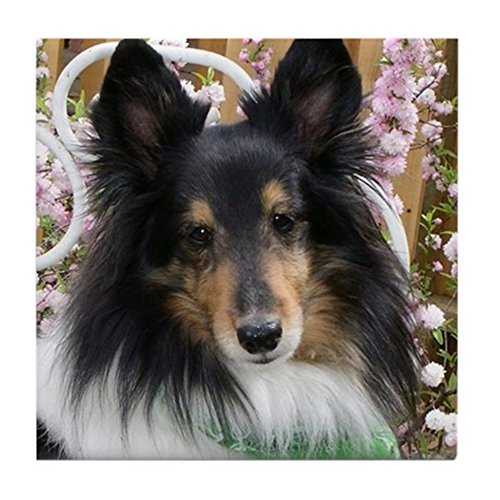 CafePress - Tricolor Shetland Sheepdog - Tile Coaster, Drink Coaster, Small Trivet