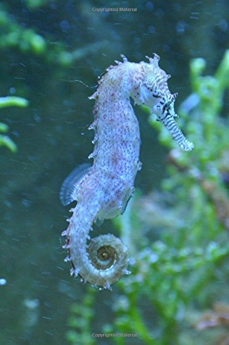 Seahorse Marine Life Journal: 150 Page Lined Notebook/Diary PDF