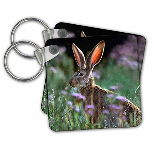 Danita Delimont - Rabbits - Blacktail Jackrabbit, Lepus californicus, New Mexico, USA - Key Chains - set of 2 Key Chains (kc_259771_1) (Keychain Rabbit Jack)