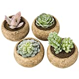 MyGift Assorted Faux Succulent Plants in Beige Pulp Pots, Set of 4