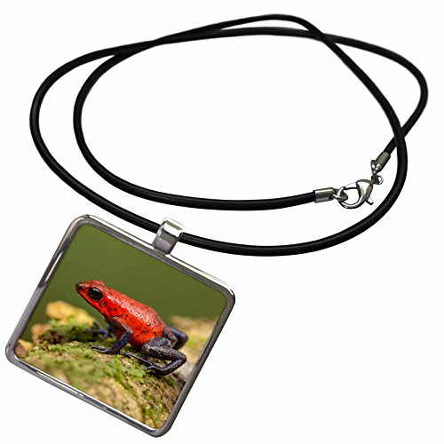 3dRose Danita Delimont - Frogs - Costa Rica - Strawberry poison dart frog on forest floor - Necklace With Rectangle Pendant (ncl_206620_1)