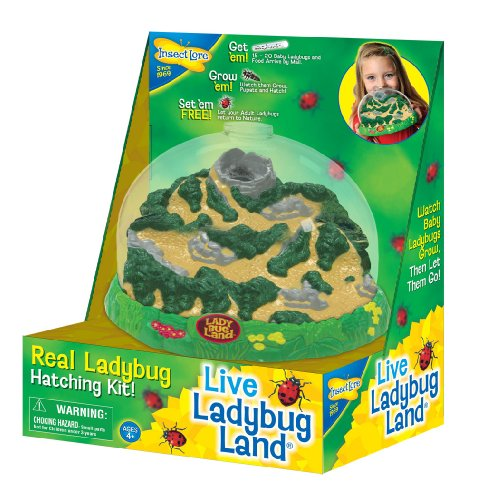 insect-lore-ladybug-growing-kit-toy-includes-voucher-coupon-for-baby-ladybug-larave-to-adult-ladybug