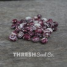 Shelling Bean (Pole) - Good Mother Stallard - 25 seeds + Free Gift