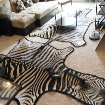Used, EXOTIC SOUTH AFRICAN ZEBRA SKIN/HIDE GRADE A RUG for sale  Delivered anywhere in USA