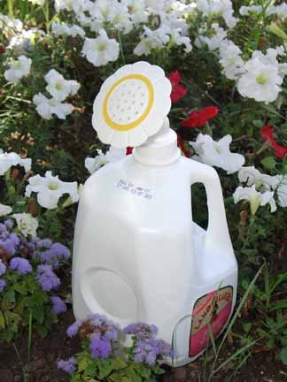 Daisy Jug - Gadjit Sprinkle Spout Daisy-Shaped Sprinkler Head -- Snaps onto Most Plastic Gallon and Half-gallon Jugs, turning them into watering cans (White)