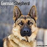 German Shepherd Calendar 2017 - Dog Breed Calendars - 2016 - 2017 wall calendars - 16 Month by Avonside