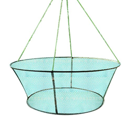 A New Folding Fishes Net Perfect for Keeping Fishes Minnows Crab Lobsters Size-31'' (Lobster Traps Used)