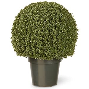National Tree 22 Inch Mini Boxwood Ball Plant in Green Pot (LBXM4-700-22) 60