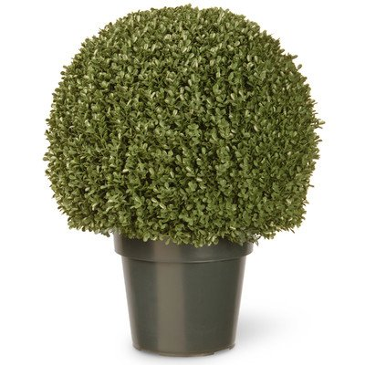 National Tree 22 Inch Mini Boxwood Ball Plant in Green Pot (LBXM4-700-22) by National Tree Company