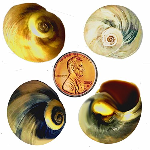 THE OTHER TIDE Hermit Crab Changing Shells - 4 Pack - Small Medium by THE OTHER TIDE