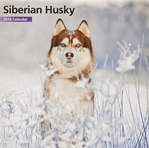 Siberian Husky 12 Month 2016 Mini Calendar