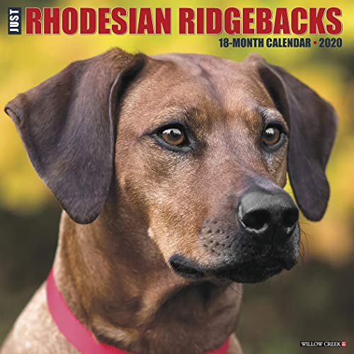 Just Rhodesian Ridgebacks 2020 Wall Calendar