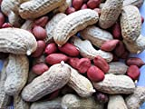 Tennessee Red Valencia Peanut - 50 Untreated Seeds-organic, Non GMO !