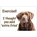 Chocolate Brown Labrador Retriever Dog Funny Fridge Magnet Lab Gift