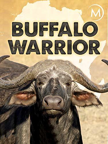 Buffalo Warrior ()