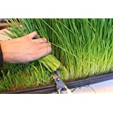 Certified Organic Wheatgrass Growing Kit - Grow & Juice Wheat Grass: Trays, Seed, Soil, Mineral Fertilizer & More
