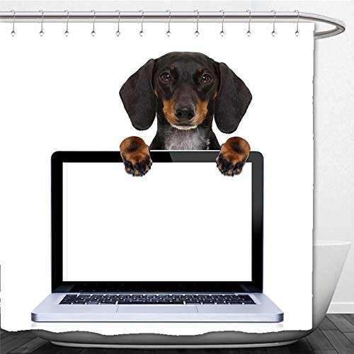 Beshowere Shower Curtain dachshund or sausage dog behind a laptop pc computer screen isolated on white (State Farm Polo)