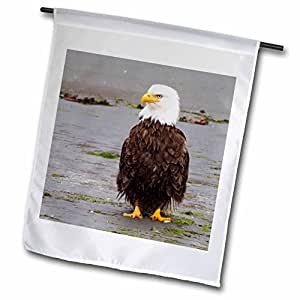 VWPics Animals - Bald Eagle sits on the mudflats waiting for food.(Haliaeetus leucocephalus).Southeast Alaska - 12 x 18 inch Garden Flag (fl_45619_1)