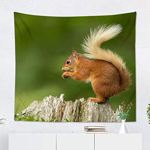 Soaring Squirrel - Suklly Tapestry Wall Hanging Polyester Green Red Squirrel Perched on Tree Stump Eating Nut Home Decor Living Room Bedroom Dorm 50 x 60 inches Picnic Mat Beach Towel
