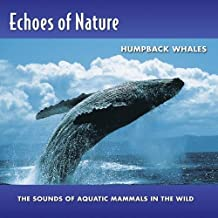 Humpback Whales  Echoes Of Nat