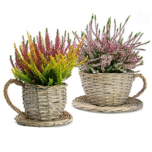 (Set of 2 Willow Teacup Planters | Cup and Saucer Plant Pots | Basket Weave Watertight Flower Containers | Perfect Gift | M&W)