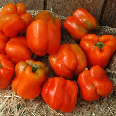 Pepper Torero F1 - Vegetable Seeds - 1,000 Seeds by GardenTrends