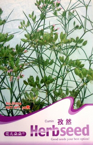 Cuminum Seed 30 Rare Herb Seeds Cumin Chinese Healthy HOT Natural Plant D004 By Mikedaoer