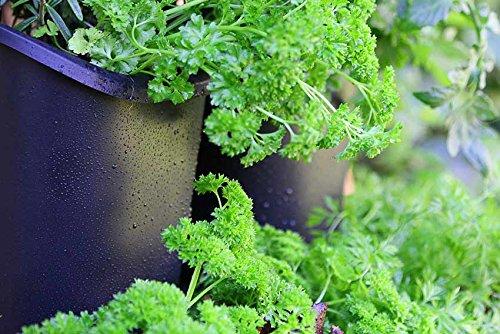 Watex Pgwsk 2 Urban Farming Vertical Garden Black Buy