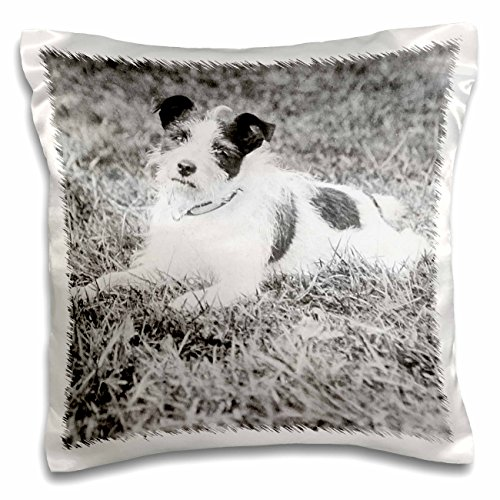 Scenes from the Past Magic Lantern - Vintage Terrier Called Terry Jack Russell Terrier Puppy Mix Circa 1910 - 16x16 inch Pillow Case (pc_246046_1) (Mix Puppy Terrier)