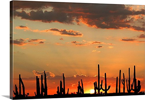 Canvas on Demand Premium Thick-Wrap Canvas Wall Art Print entitled A brilliant sunset with silhouettes of saguaro cacti in Mesa, Arizona. 48