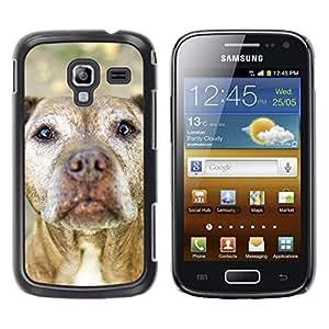 Be Good Phone Accessory // Dura Cáscara cubierta Protectora Caso Carcasa Funda de Protección para Samsung Galaxy Ace 2 I8160 Ace II X S7560M // American Pit Bull Terrier Dog Canine