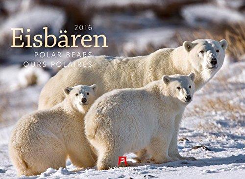 Eisbären 2016