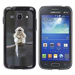 Be Good Phone Accessory // Dura Cáscara cubierta Protectora Caso Carcasa Funda de Protección para Samsung Galaxy Ace 3 GT-S7270 GT-S7275 GT-S7272 // Japanese Snow Monkey Ape Cute