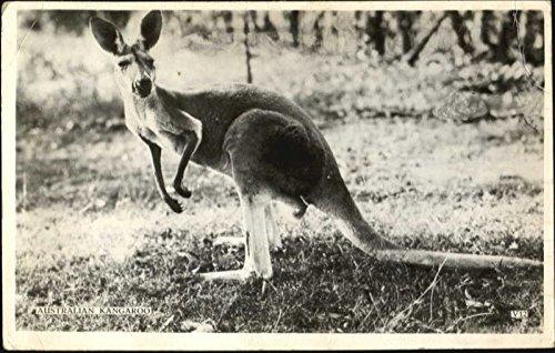 Australian Kangaroo Other Animals Original Vintage Postcard from CardCow Vintage Postcards