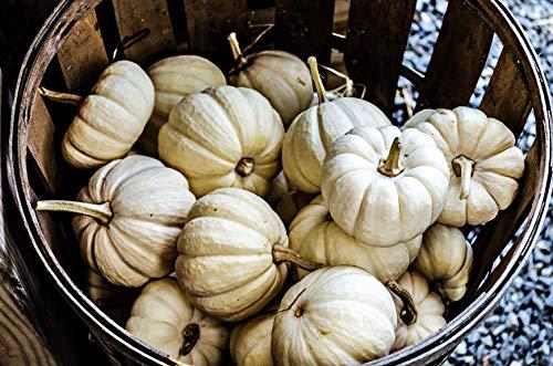 Baby Boo Pumpkin - Baby Boo (Treated) - Pumpkin Seeds by Hometown Seeds