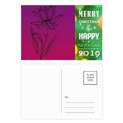 Amazoncom Black Line Lotus Flower Plant Flower 2019 New Year