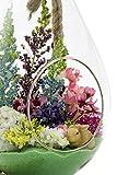 "Terrarium Kit | Spring N Bloom Spring Series| Complete Gift Set | 10"" Teardrop/Pear Shaped Glass Planter with 15"" Rope | Easter Terrarium | Nautical Crush Trading TM"