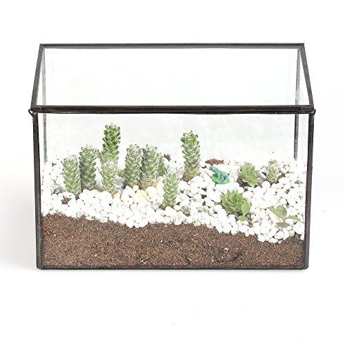 Geométrico de Cristal Transparente Rectángulo caja de terrario mesa suculenta Maceta Helecho Musgo