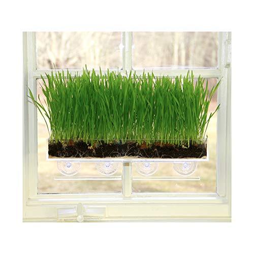 Window Garden Organic Wheatgrass