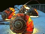 Handmade Lighting Garland Nautical Home Decor Beach Wedding Decor