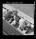 1942 Photo Provincetown, Massachusetts. Loading fish into tubs to be hoisted aloft from a Portuguese dory to the commercial pier Location: Barnstable County, Massachusetts, Provincetown