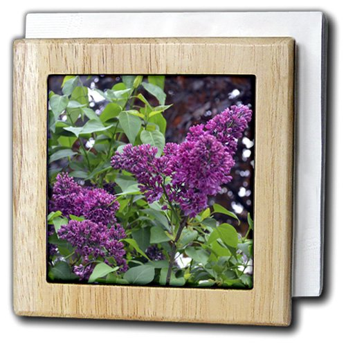 Whiteoak Photography Floral Prints – Blooming Lilacs in Michigan – タイルナプキンホルダー 6 inch tile napkin holder nh_53690_1 6 inch tile napkin holder  B008AJF03K