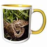 Western Massasauga Rattlesnake, Arizona - US39 JMC0055 - Joe and Mary Ann McDonald Mug is available in both 11 oz and 15 oz. Why drink out of an ordinary mug when a custom printed mug is so much cooler? This ceramic mug is lead free, microwave safe a...
